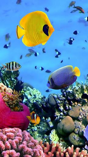 Скачать Oкеанов Рыба Живые Обои для Андроид