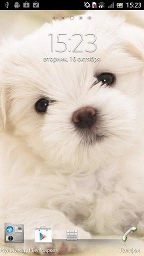 Скачать Щенок Живые обои / Puppy Live Wallpaper для Андроид