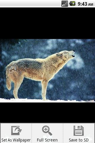 Скачать Волк обои / Wolf Wallpaper для Андроид